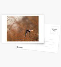 Wetlands Postcards