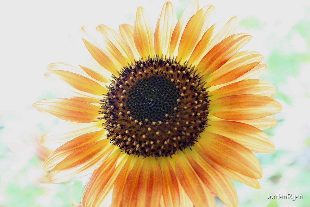 Sunflower by JordanRyan