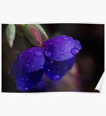 Violet Purple Flower Poster