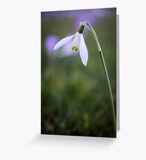A single snowdrop Greeting Card