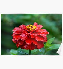 Gorgeous Red Flower Poster