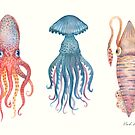 Octopus, Jellyfish and a Squid by Vlad Stankovic