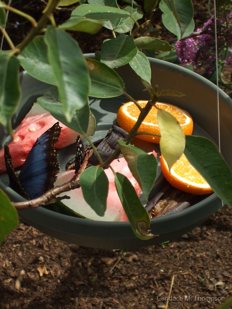 Butterflies and Fruit by Candace M. Thompson