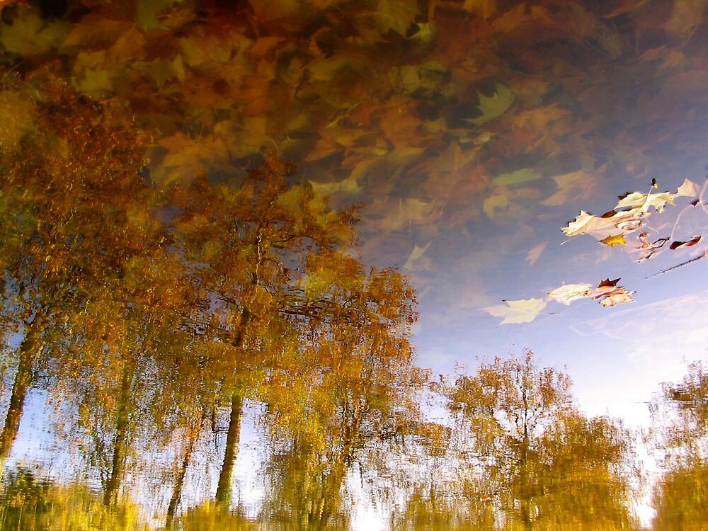 Autumn by C1oud