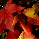 ~Autumn Leaves~ by a~m .