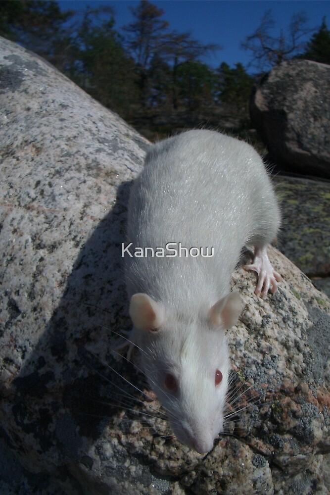 Foxy on a rock by KanaShow