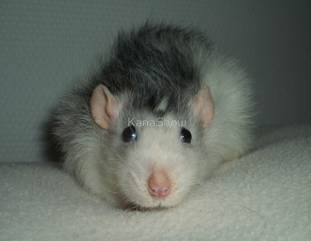 The soft plush rat Kirppu by KanaShow