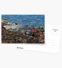 Lazin on a Sunny Afternoon Postcards