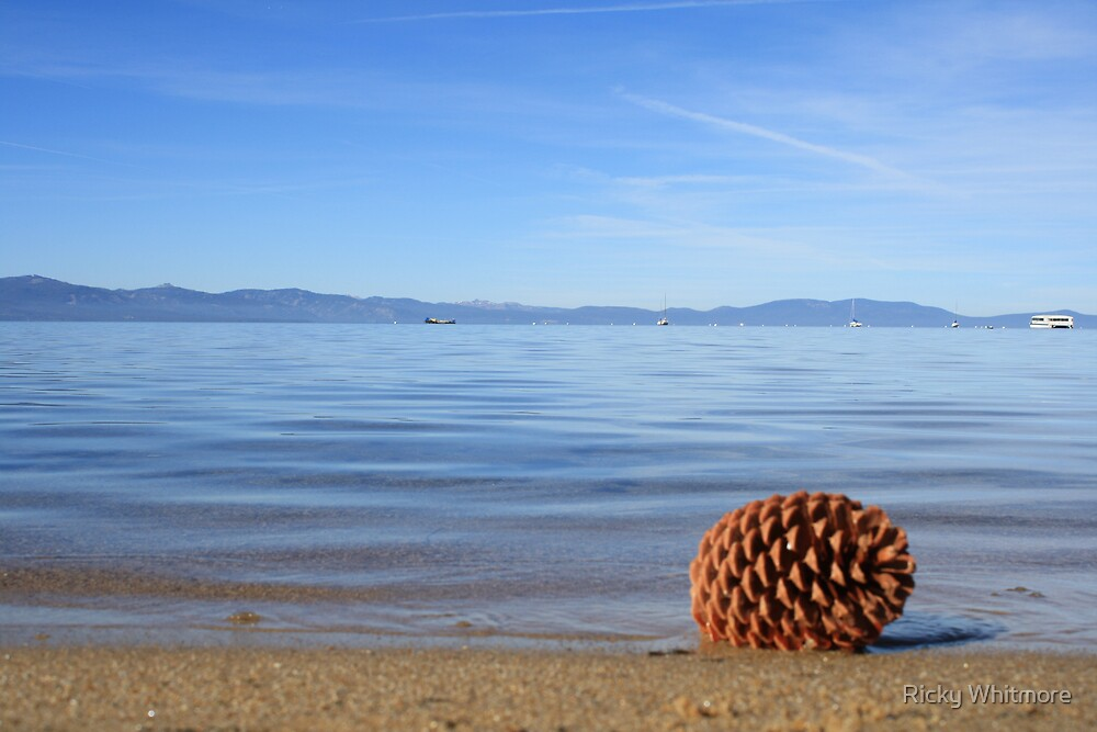 Pine cone at South Lake Tahoe by Ricky Whitmore