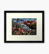 Lazin on a Sunny Afternoon Framed Print
