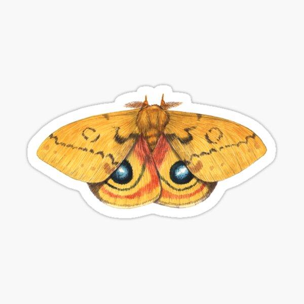 Io Moth (Automeris io) Male Sticker
