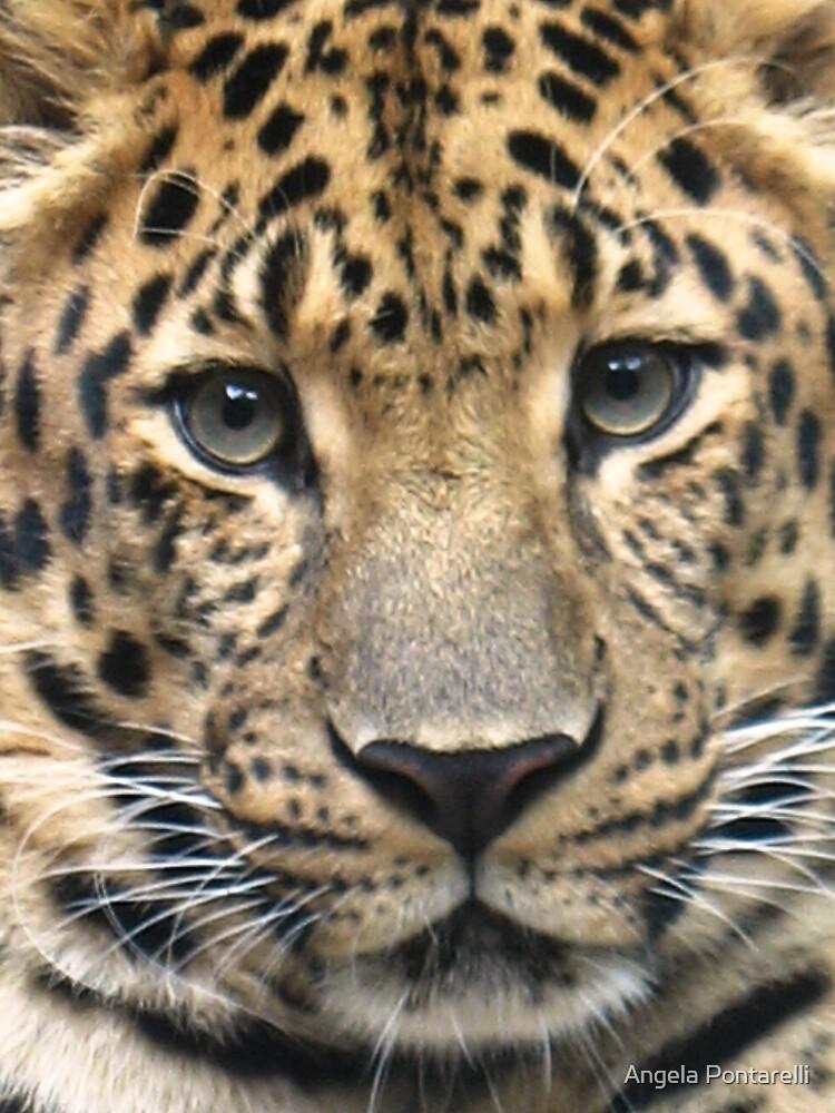 beautiful cheetah by Angela Pontarelli