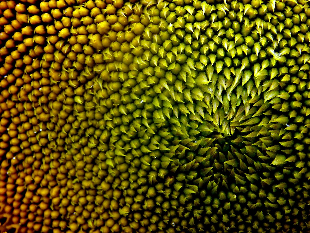 The center of the sunflower universe by Melissa  W
