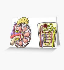 Kidney transplant greeting cards redbubble human kidney renal anatomy illustration greeting card m4hsunfo