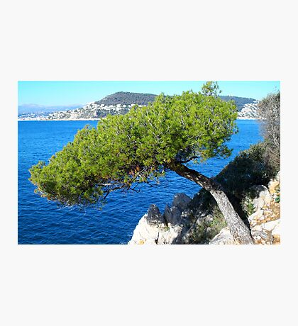 Gorgeous pine-tree ! Photographic Print