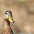 Duck by Karl R. Martin