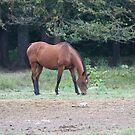 Horse by Karl R. Martin