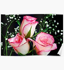 Pink and white Roses Poster