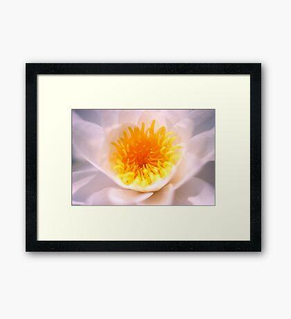 White Lilly #1 Framed Print