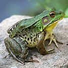 Bullfrog by Karl R. Martin