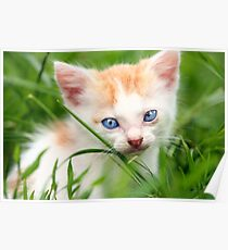 Adorable kitty in grass Poster