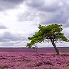 The Lonely Tree by shutterjunkie