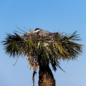 Blue Heron in Nest by ValeriesGallery