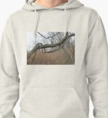 Late autumn, fallen tree, vines twist itself around  trunk of fallen tree, leaves flew Pullover Hoodie