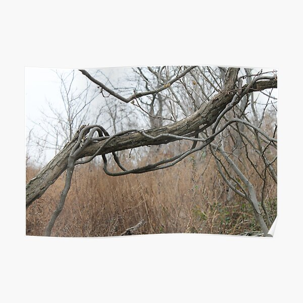 Late autumn, fallen tree, vines twist itself around  trunk of fallen tree, leaves flew Poster