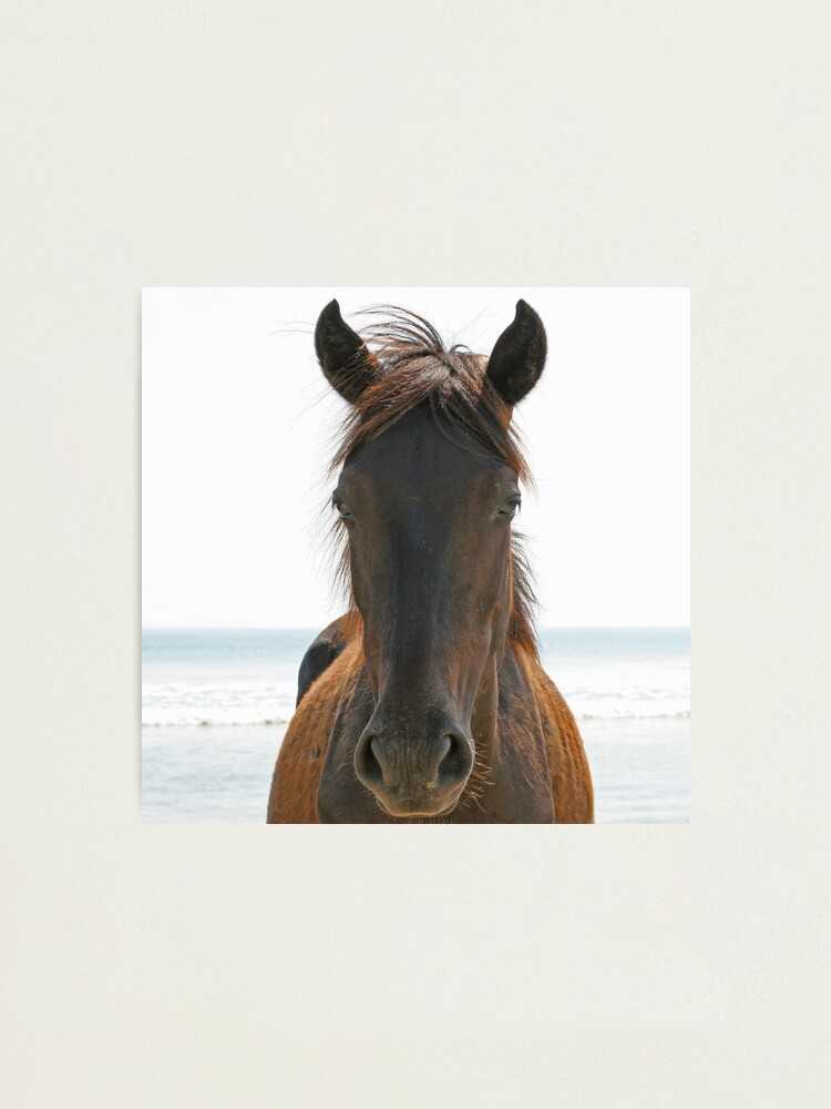 Alternate view of Wild Horse Photographic Print