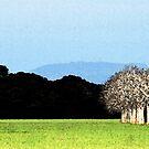Almond Skyline by denisegladwell
