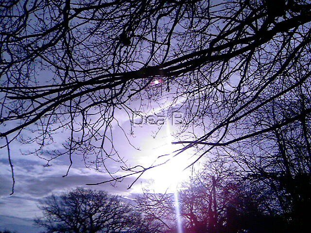 Winter Morning by Dea B