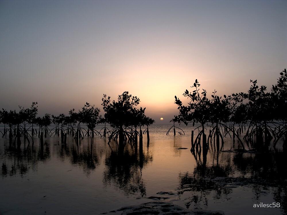 Mangrove sunset by avilesc58