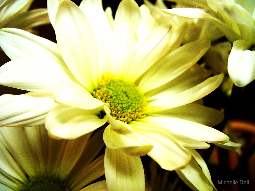 Daisy by Michelle Bell