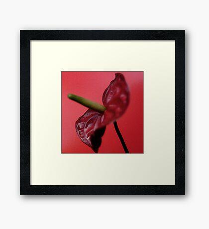 Anthurium #1 Framed Print