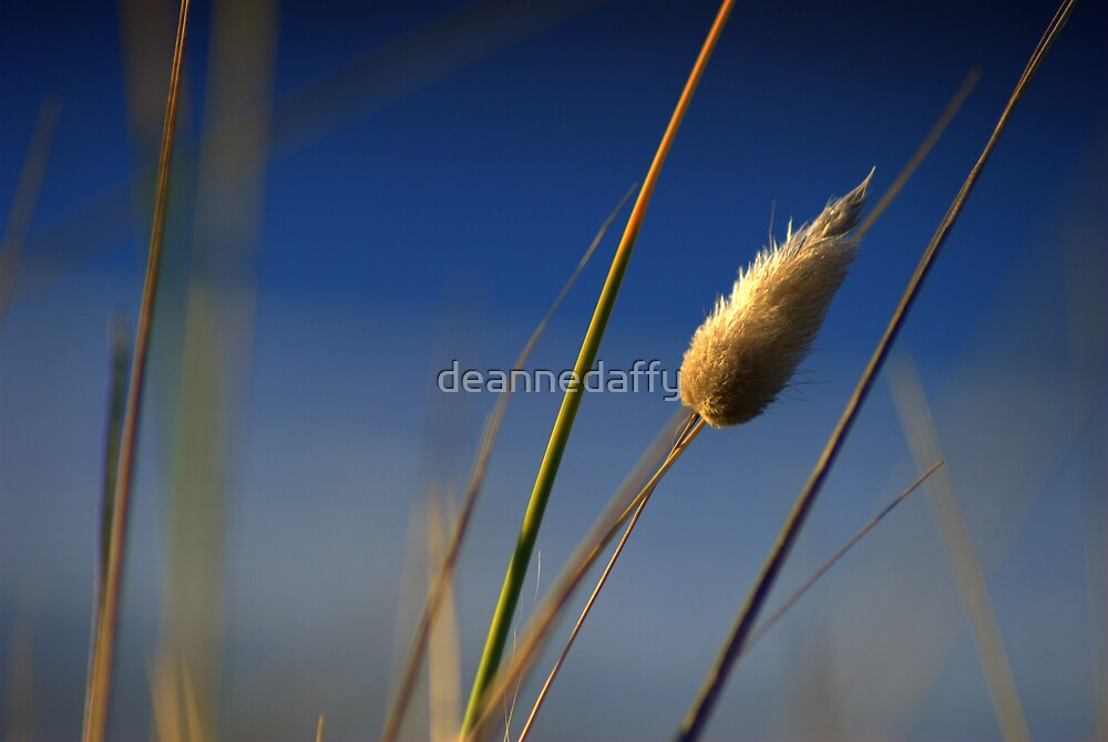 Whispers of Wind by deannedaffy