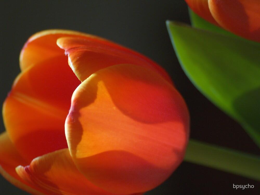 Tulip by bpsycho