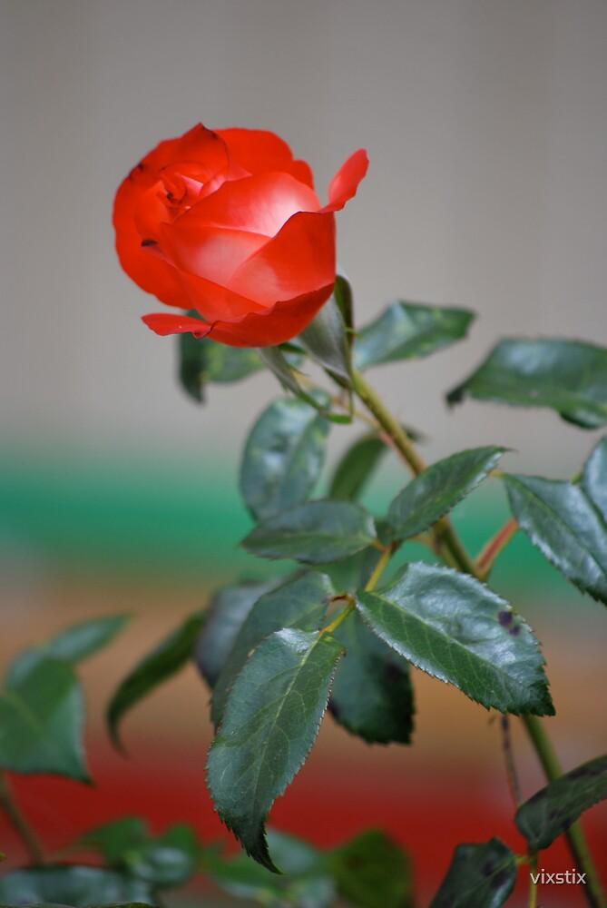 Summer Rose by vixstix