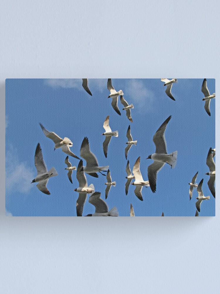 Alternate view of Flock of Gulls Canvas Print