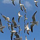 Flock of Gulls by Karl R. Martin