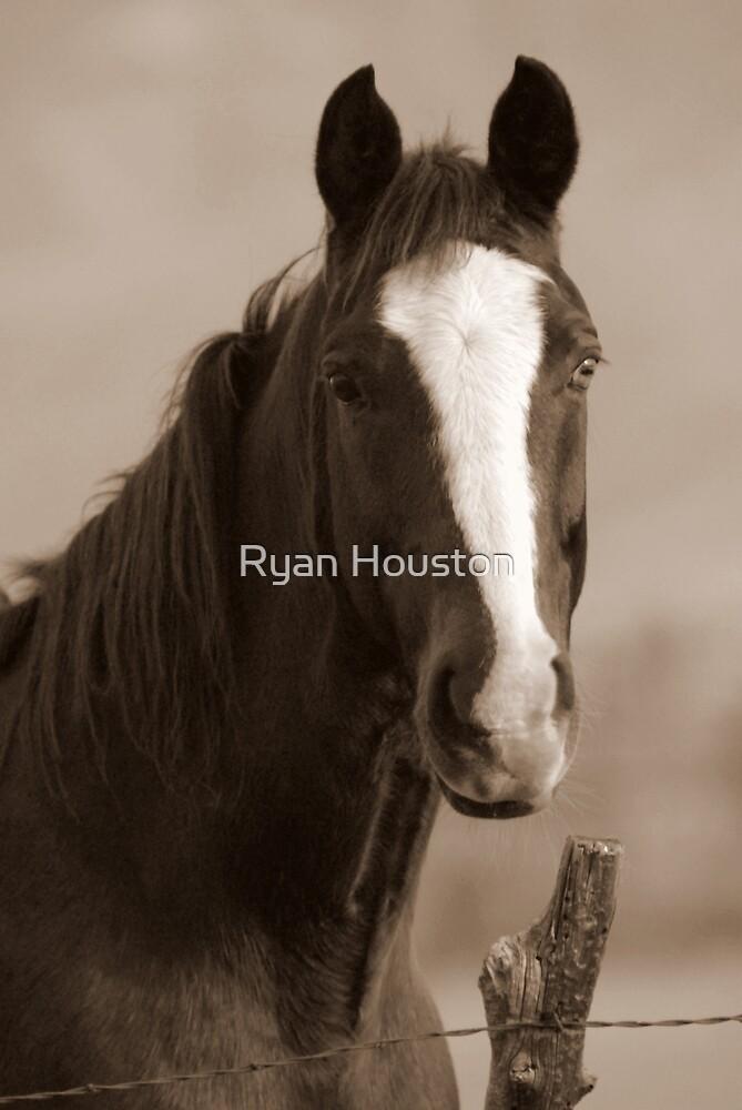 Sepia Horse by Ryan Houston