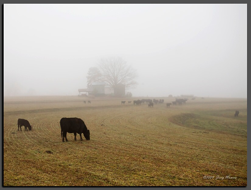 Foggy Morning on the Farm by Jerry  Mumma