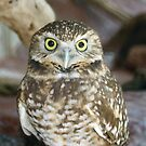Owl by Karl R. Martin