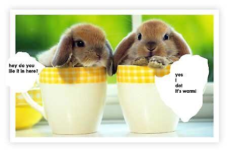 Rabbits are fun by victoria clifford