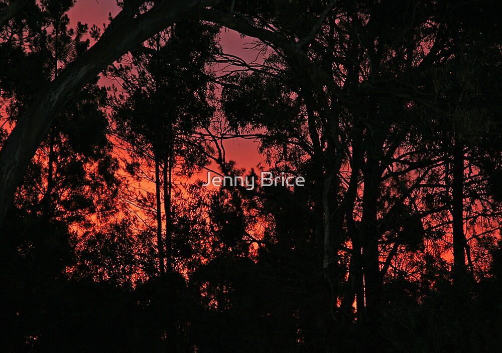 Christmas Day Sunset by Jenny Brice