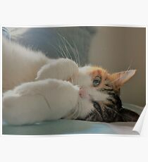 Furry Friend Poster