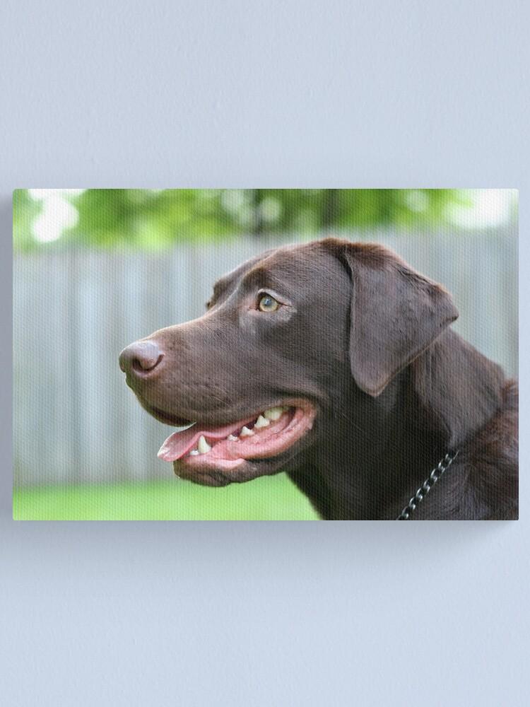 Alternate view of Labrador Retriever Canvas Print