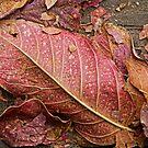 Stairway Leaves by Larry Costales
