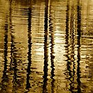 Golden Reflection by leslie wood