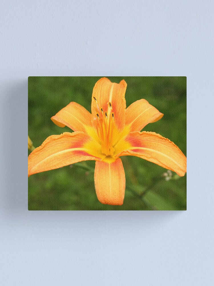 Alternate view of Orange Daffodil Canvas Print